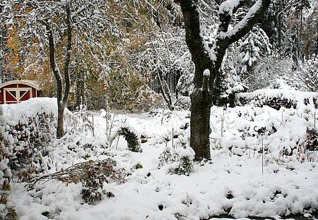 Tief verschneiter Naturgarten