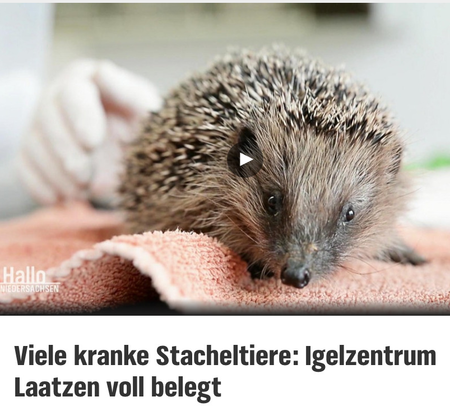 19.Oktober 2020   NDR -Studio Hannover   Viele kranke Stacheltiere: Igelzentrum Laatzen voll belegt