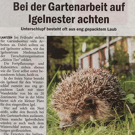 3. Mai 2020   Sonntagszeitung - Bentheimer Grafschaft   Bei der Gartenarbeit auf Igelnester achten