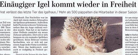 12. August 2020   Neue Presse Laatzen   Einäugiger Igel kommt wieder in Freiheit