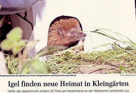 7. Mai 2020   Neue Presse Laatzen   Igel finden neue Heimat in Kleingärten