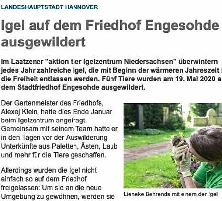 "19. Mai 2020 | Hannover.de | ""Igel auf dem Friedhof Engesohde ausgewildert"""