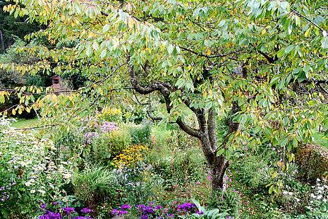 Bunter, wilder Garten