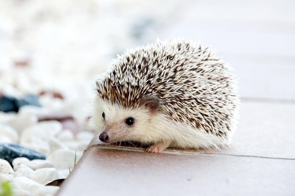 Aktion Tier Igelzentrum Niedersachenlaatzen